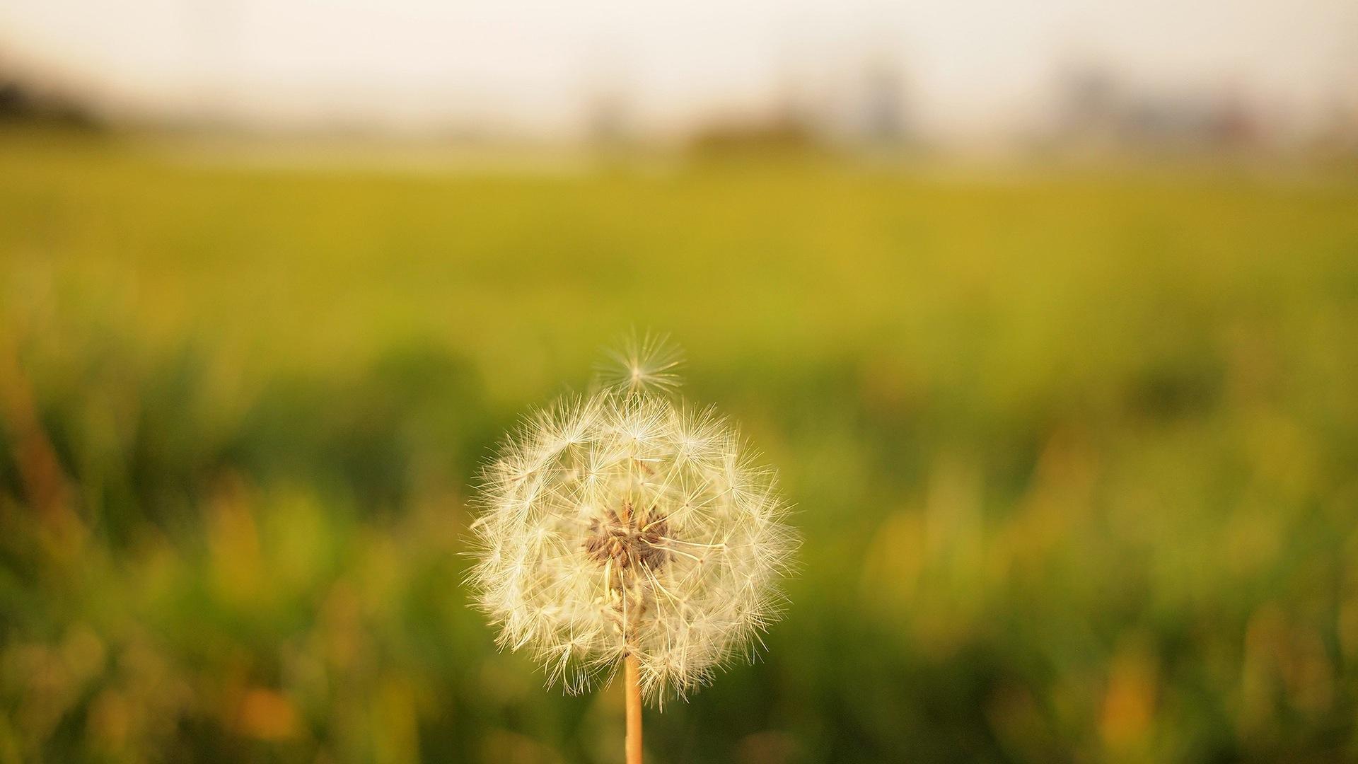 EUMOSCHOOL OER: Duyguların Didaktiğini  öğrenmek isteyen öğretmenler için bireysel  öğrenme Açık Öğrenim  Kaynağıdır
